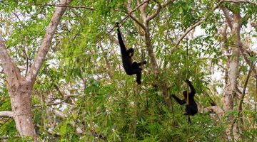 wild-gibbon-tour-cat tien